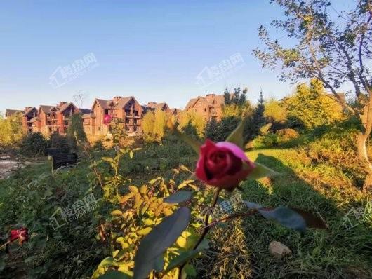 玫瑰小镇实景图