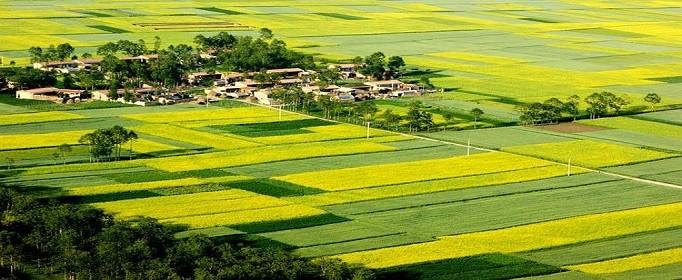 土地拍卖流程是什么