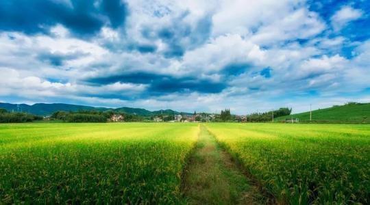 农村集体土地征收基层政务公开标准是什么?