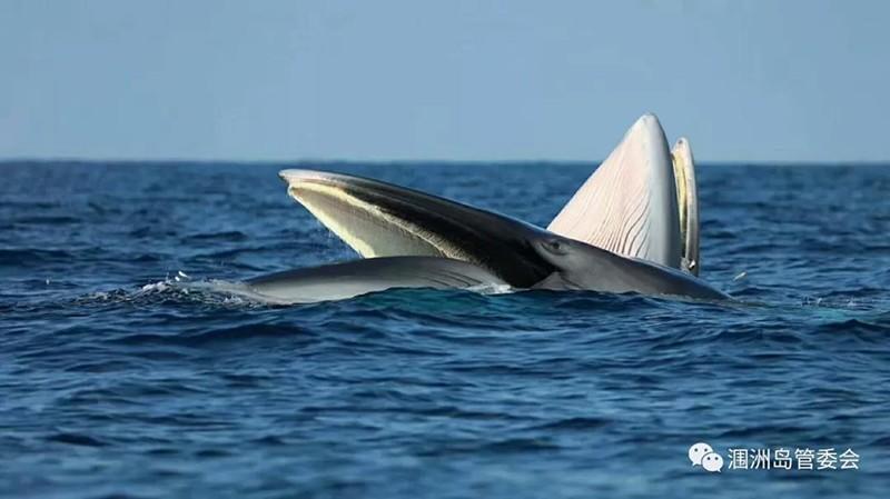 鲸鱼.jpg