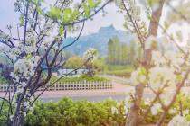 万物更新·探春古滇丨云南如诗般的春景,都藏在长腰山院墅的客厅里