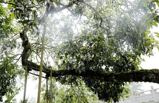 腾冲森林公安助40余只野生鸟重返家园