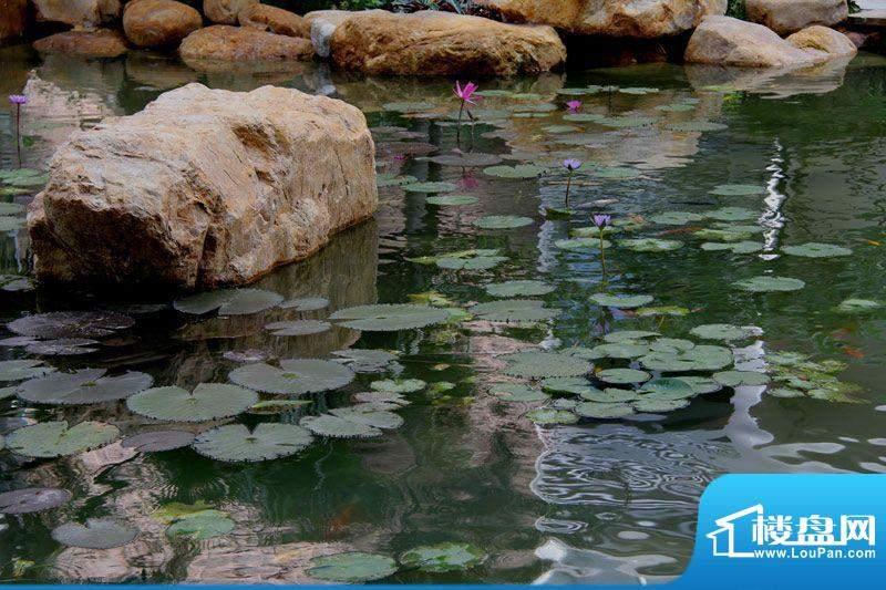 华杰·赫尔馨居小区池塘实景图20120129