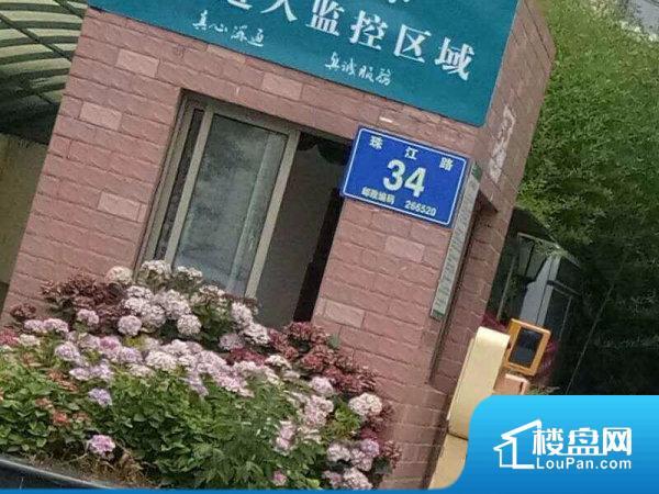 千城凤梧金沙(34号)